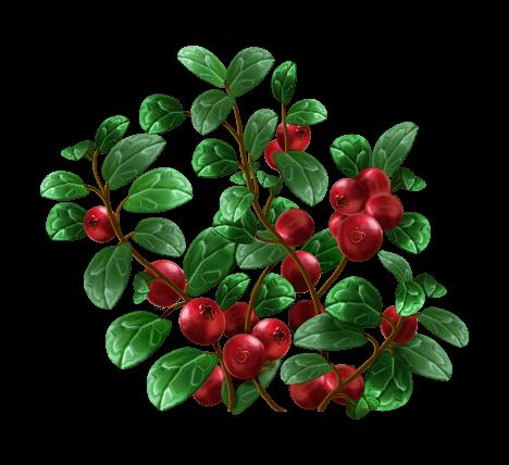 Листья брусники, 50 гр